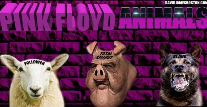 PINK FLOYD ANIMALS PHOTO BY DAVID JAMES IN BOSTON